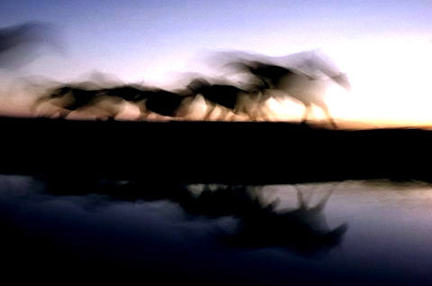Motion study of horses by Ernst Haas