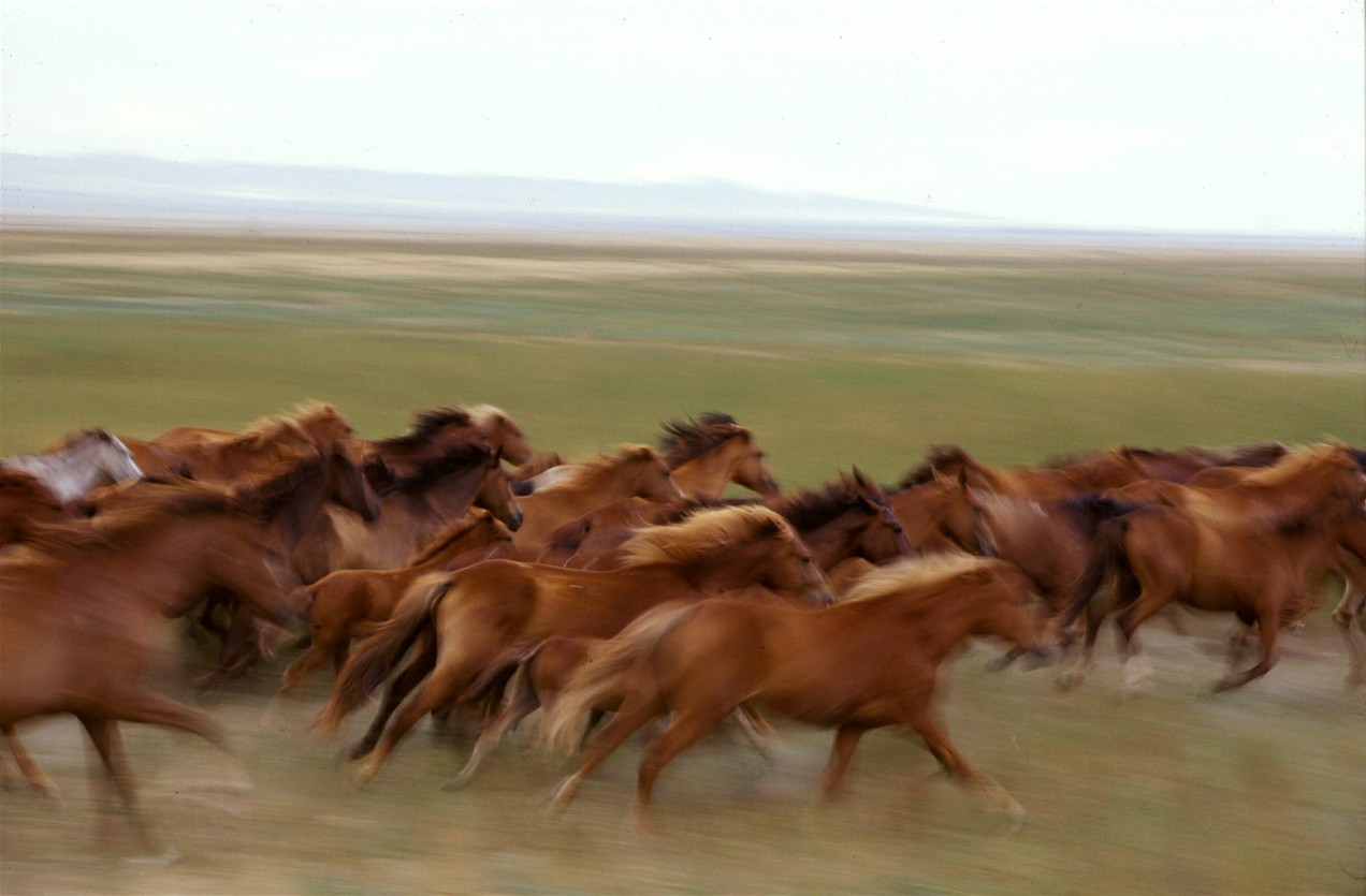Kazakh Steppe Horses