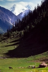 nomads, summer pasture, mountain meadow, Dzhailyau, Khan Tengri, Tien Shan, Kazakhstan