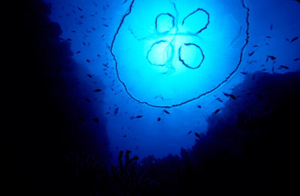 Marine life, Caribbean, Natural History, Nature, Nature Photography, Saba, The Living Seas, book, underwater, underwater photography, wildlife, SCUBA, ocean