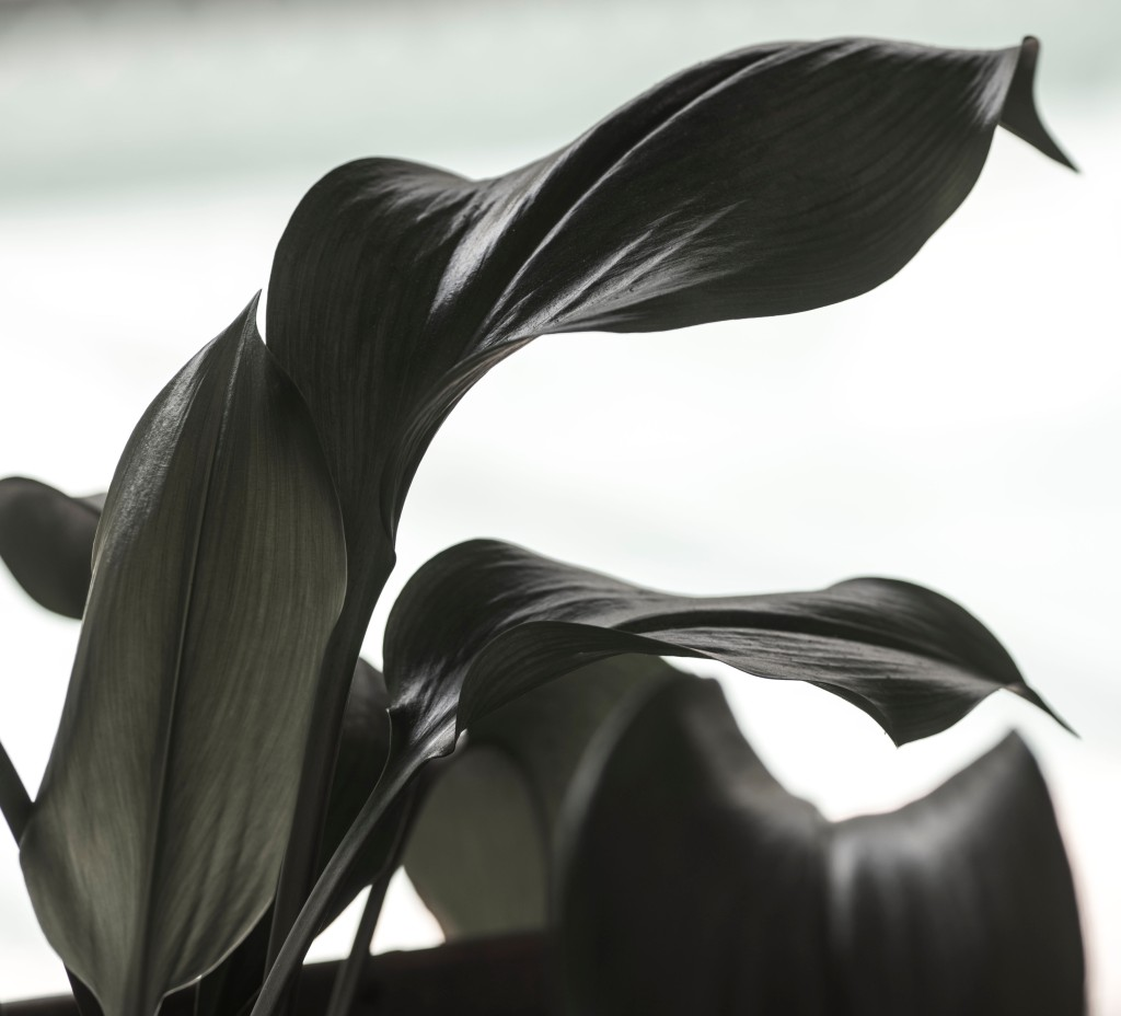 Nature, Photography, Photographic Art, Plant, Image, Black and White,