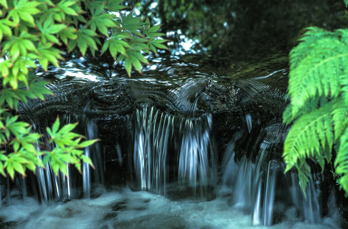 Garden, Serenity, Water, Japan, moss garden, Muromachi Period, Zen Buddhist, stroll garden, meditation garden,