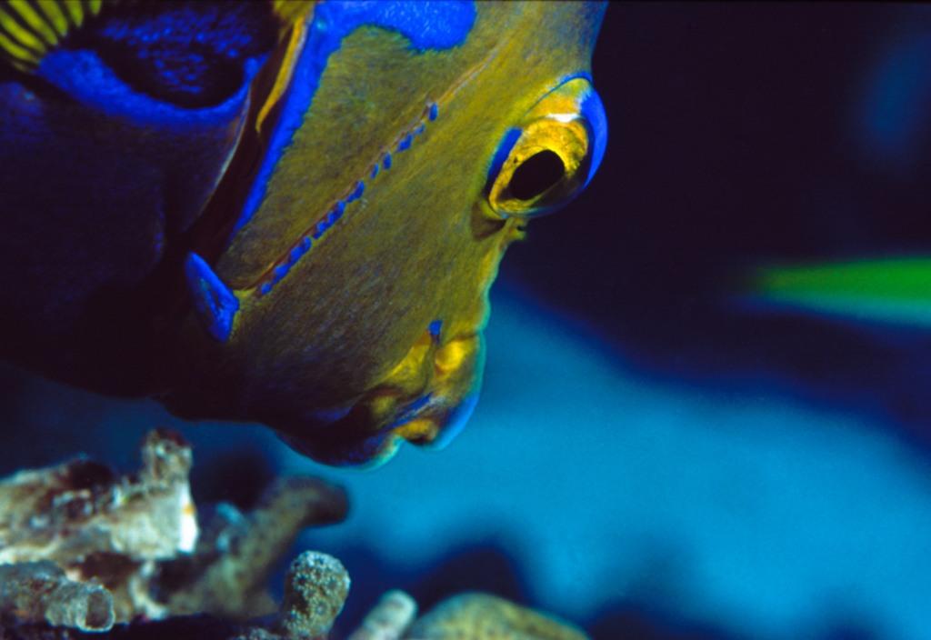 The Living Seas, Underwater photography, fine art, marine life, ocean, sea, fish,