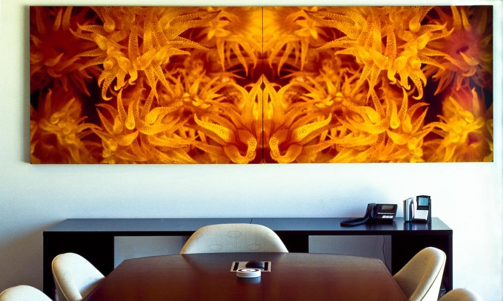 Art, Photographic Art, fine art, underwater image, Bonaire, Coral Polyps, Orange Tube Coral, mural, Corporate Art, Art Specifier, Art for Corporations,
